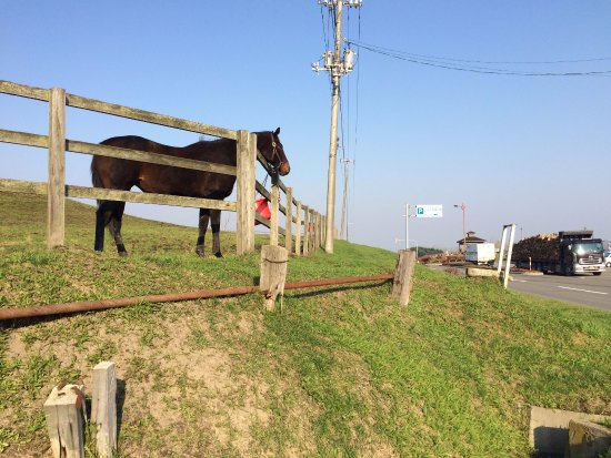 Niikappu-cho, Japan: 公園向かいの牧場