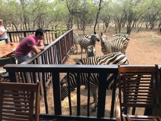 Marloth Park, Sudáfrica: Needles