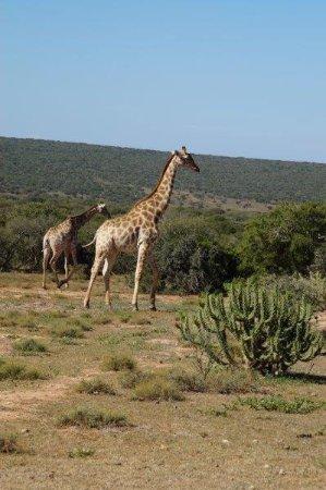 Uitenhage, Südafrika: Charihandra Game Lodge