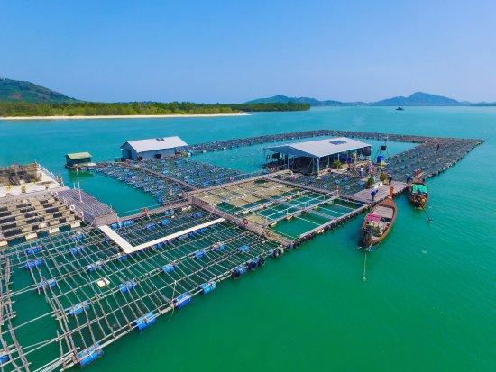 Phuket Pearl