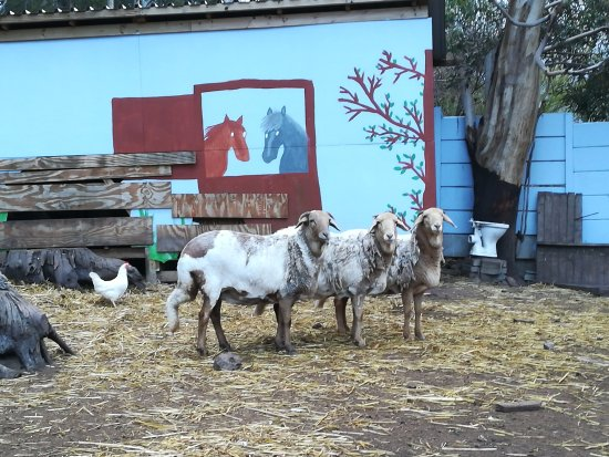 African Family Farm: Tiere in ihrem Gehege