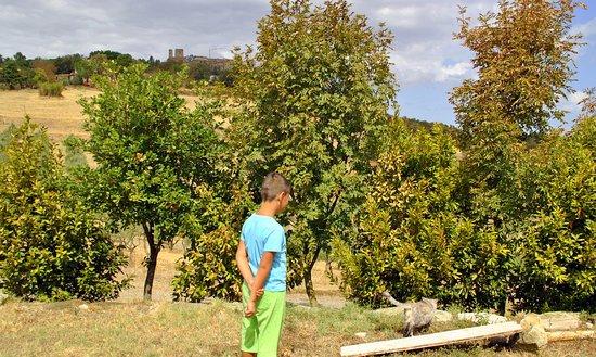Montecastelli Pisano, Italië: Gri