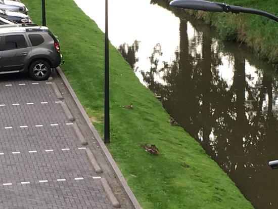 Nieuwerkerk aan den Ijssel, Países Bajos: parcheggio con anatre