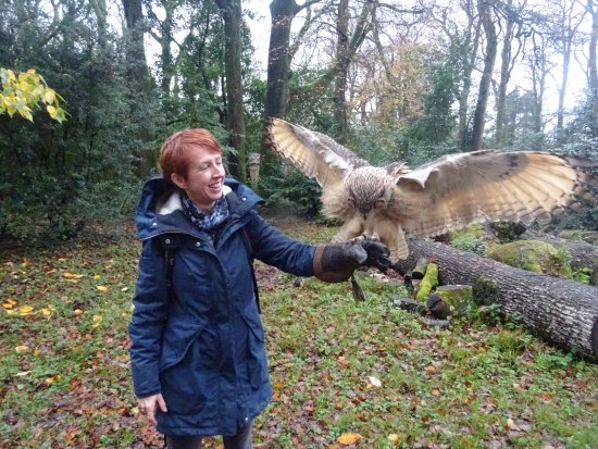 Haverfordwest, UK: The Owl Experience