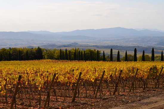 Montalcino, Italy: Vineyards