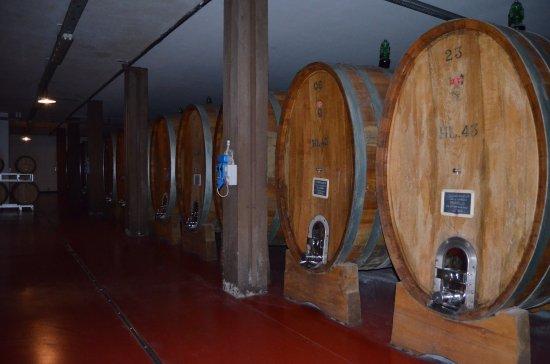 Montalcino, Italy: cellar