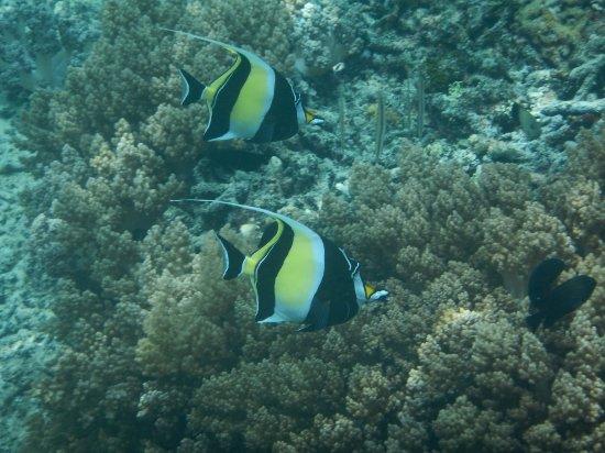 Mango Dive & Bungalow: DSCN4091_large.jpg