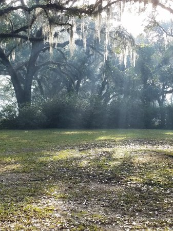 Butler Greenwood Plantation: 20171117_082831_large.jpg
