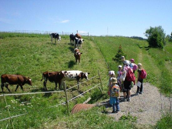 Jarvenpaa, Finland: Pasture of cows
