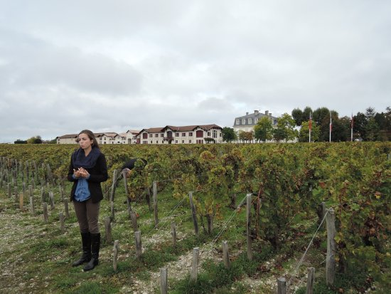 Pauillac, Frankreich: Mathilde explaining biodynamic horticulture in the vineyards