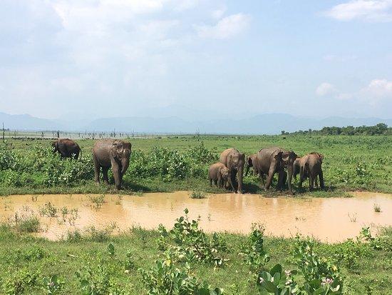 Uda Walawe National Park, Sri Lanka: photo3.jpg