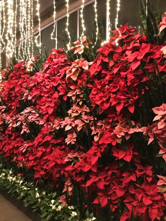 Atlanta Botanical Garden: photo2.jpg