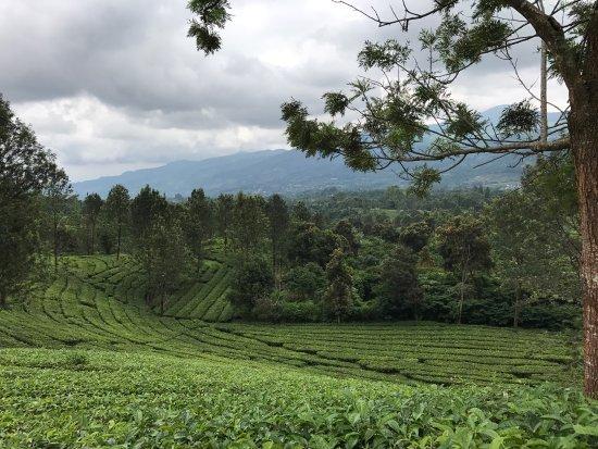 West Java 이미지