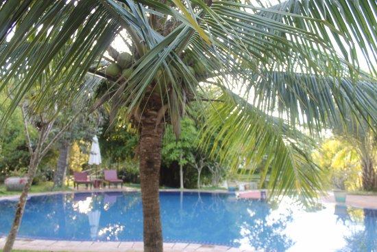Battambang Resort: piscina con giardino tropicale...