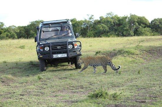 Explore Africa Safari