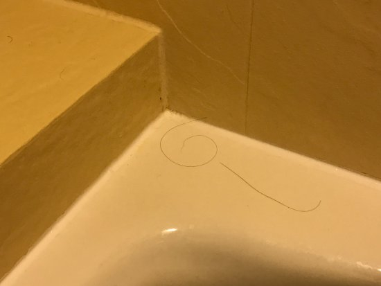 Disney's Caribbean Beach Resort : Filthy bathtub - obviously not cleaned after last guest.