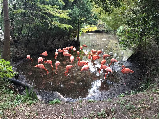 Jacksonville Zoo & Gardens : Pink Flamingos doing their thing as usual.