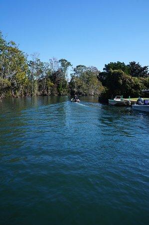 Bird's Underwater: Crystal River