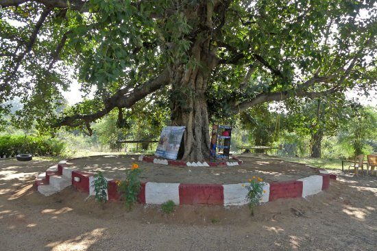 Kohka, India: The Banyan Tree itself