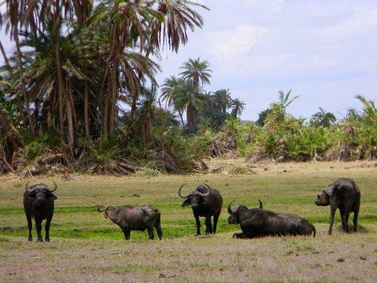 Marco Polo Safaris: Safari Kenia