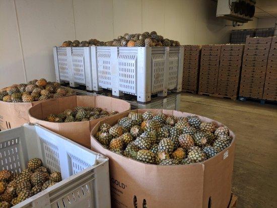 Makawao, HI: Packing freezer