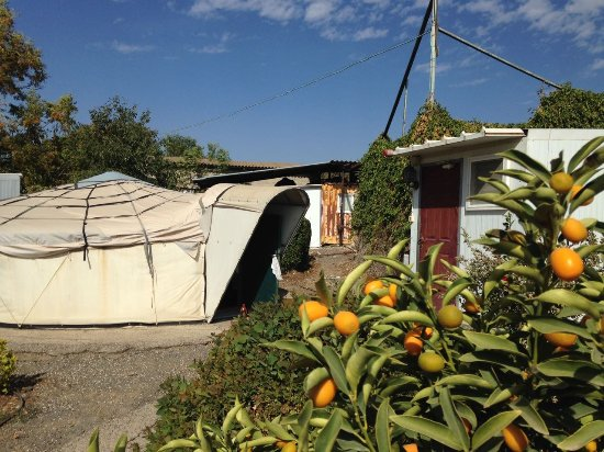 Givat Yoav: Tent to the left and private bathroom to the right. In front some nice gardening