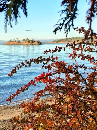 Eastsound, WA: Fall colors with a view of Freeman Island