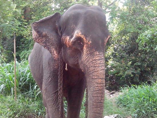Кегалле, Шри-Ланка: Schöne Elefantchen