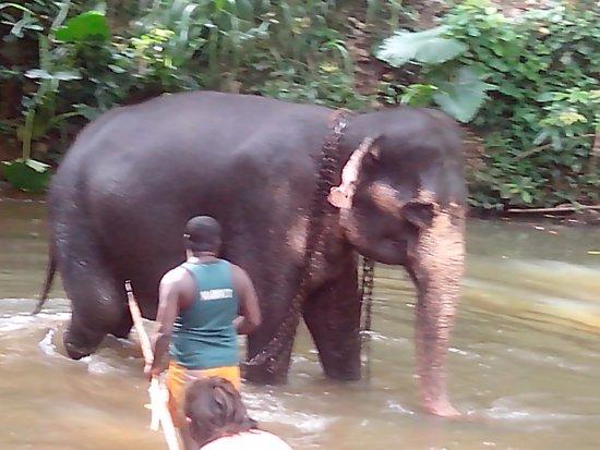 Kegalle, Sri Lanka: Elefantchen beim Baden