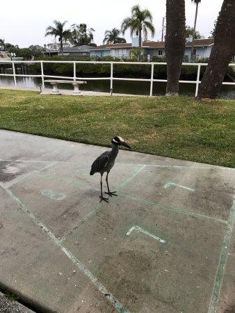 Hudson, FL: Larry Bird