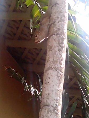 Club Palm Bay Hotel: Sreiendes Einhörchen