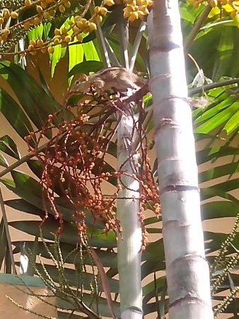 Club Palm Bay Hotel: Immer wieder Einchörchen