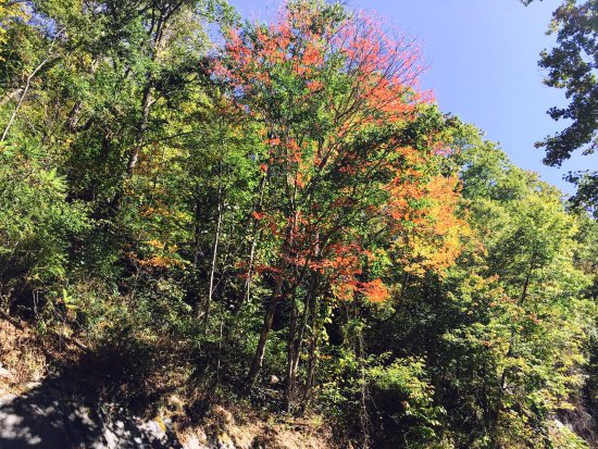 Chimney Tops: some nice red color coming through mid-Oct