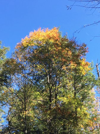 Chimney Tops: early fall colors coming through