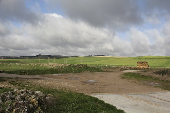 Province of Valladolid, Spain: Campos en Villasexmir I