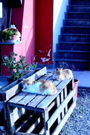 Montalto di Castro, Italien: Gatti fuori del ristorante