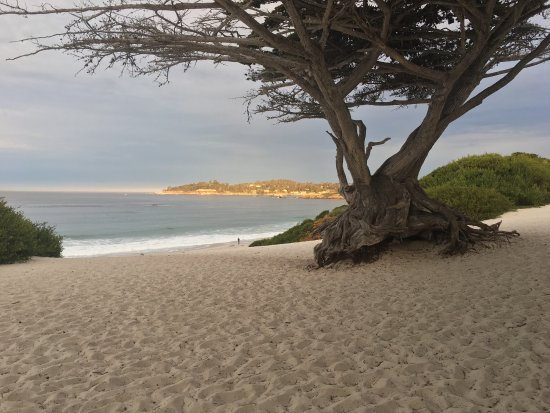 Carmel City Beach/Carmel River Beach: photo4.jpg