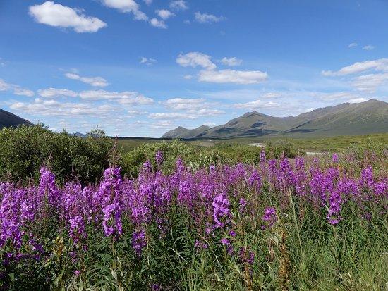 Tomstone range, Tombstone Territorial Park