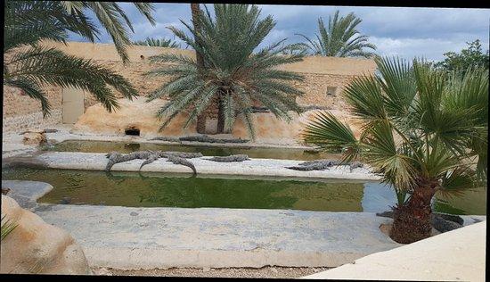 Мидун, Тунис: 20171115_161928_large.jpg