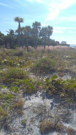 Lido Beach: IMG_20171109_103928562_large.jpg