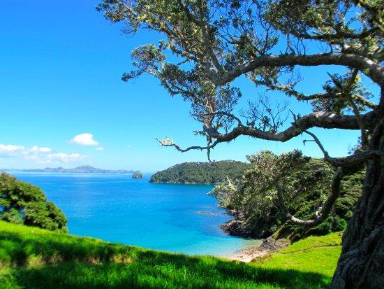 Paihia, Nueva Zelanda: Shady tree to take a rest and admire the view around Urupukapuka