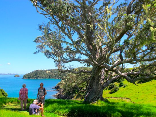 Paihia, Νέα Ζηλανδία: Taking a rest to admire the view