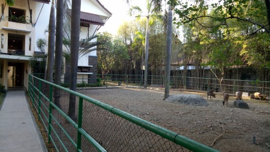 Novotel Surabaya Hotel and Suites: mini zoo