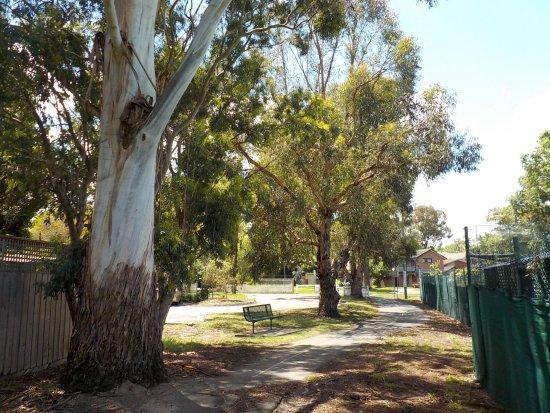 Melbourne gum tree