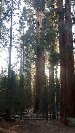 Visalia, Καλιφόρνια: 20171118_160652_large.jpg