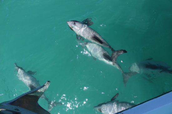 Coast up Close: Many dolphins!