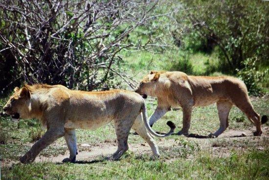 Rekero Camp, Asilia Africa 이미지