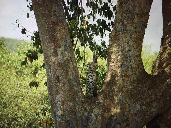Rekero Camp, Asilia Africa: photo7.jpg