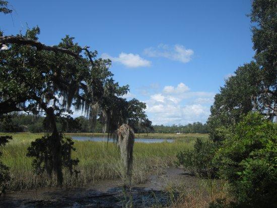 Mount Pleasant, Carolina del Sur: swamp land