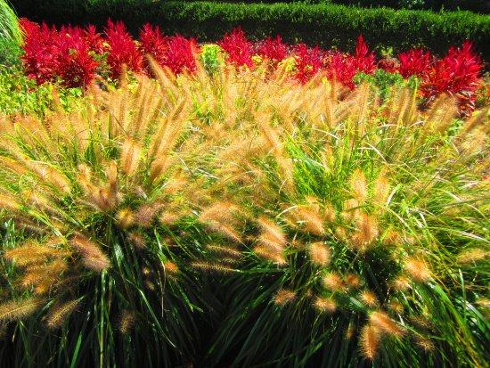 Mount Pleasant, Carolina del Sur: garden